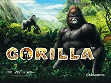 Gorilla играть в Вулкане удачи